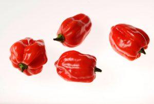 Chilli habanero červené