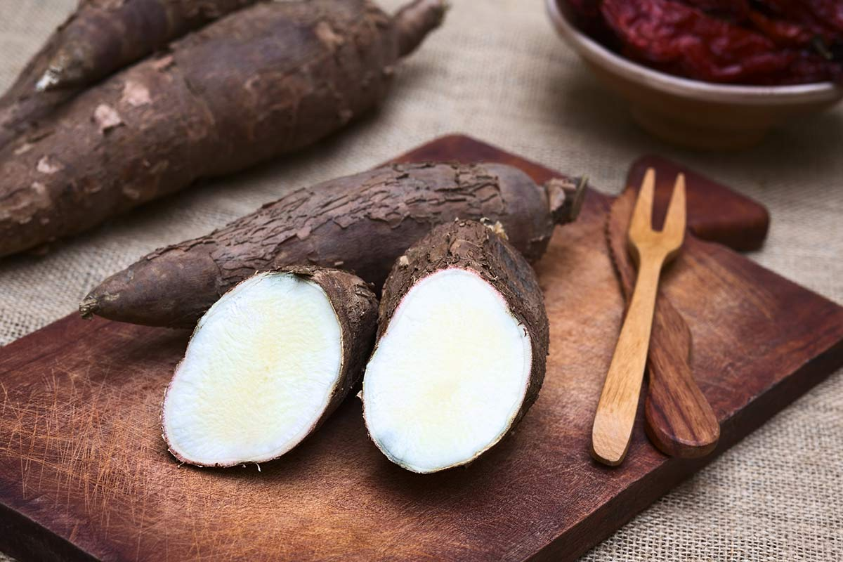Maniok/kassava